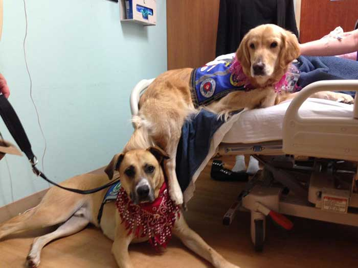 Faithful Paws Therapy dogs - Andie and Ranger - visiting patient