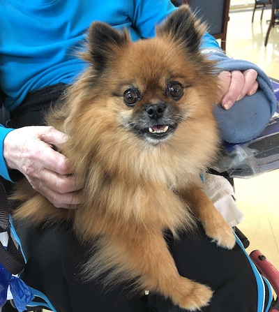 Faithful Paws Pet Therapy