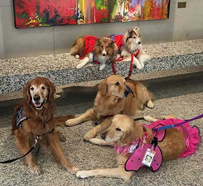 Faithful Paws Pet Therapy Visiting Patients